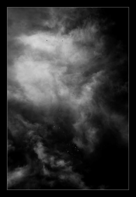 duiven-winter-gers-france-andre-hemelrijk