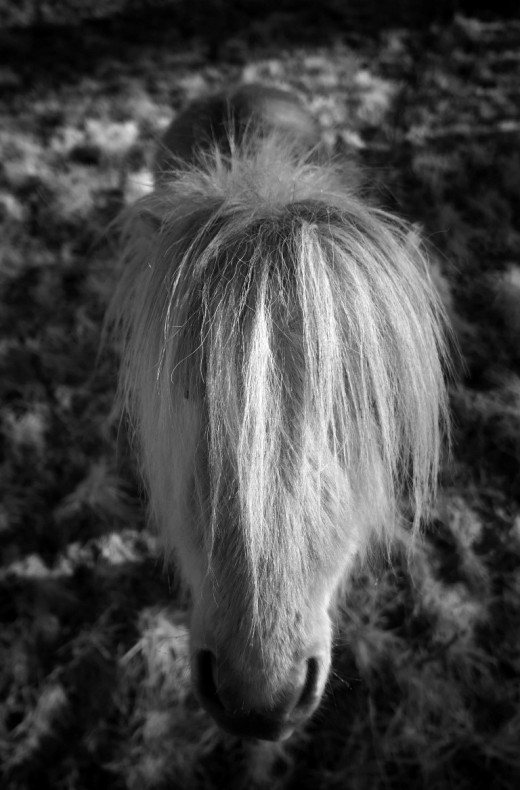 winter-gers-france-pony-andre-hemelrijk