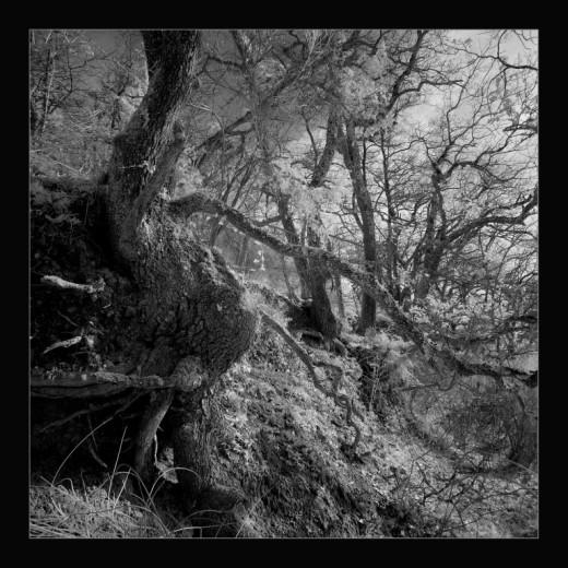 winter-old-tree-gers-france-andre-hemelrijk