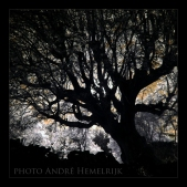 trees of aragon spain 10-2017 andré hemelrijk (6)