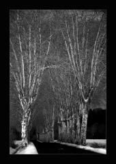 Winter Platanen Gers France André Hemelrijk