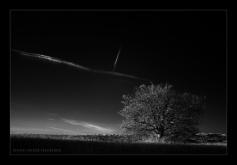 DSC_6392c (Medium) André hemelrijk