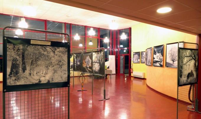Cinéma La Strada-Decazeville expo l'arbre en lumiere André Hemelrijk oct 2018 (1)