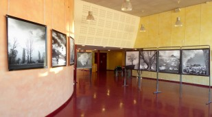 Cinéma La Strada-Decazeville expo l'arbre en lumiere André Hemelrijk oct 2018 (2)