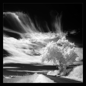 Hemelrijk - André - La Révélation de la Photosynthèse -06-2016 (70x70)
