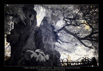 tree saved by a brave man baamonde galicia spain photographie André Hemelrijk