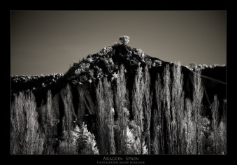 Aragon Spain the tree on the hill André Hemelrijk
