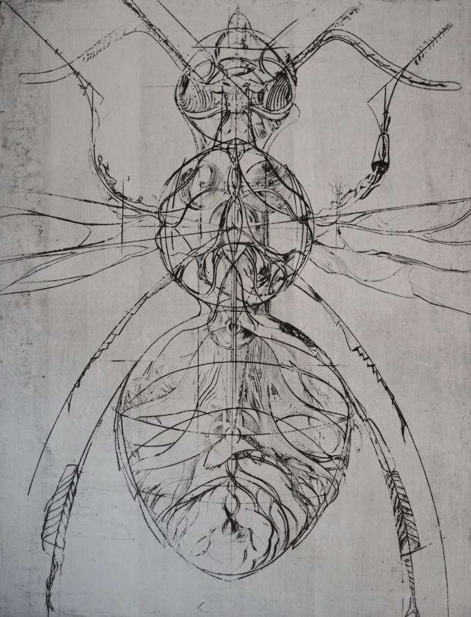 Charley Case, L'abeille blanche, gravure, 100 x 80 cm, 2020kopie