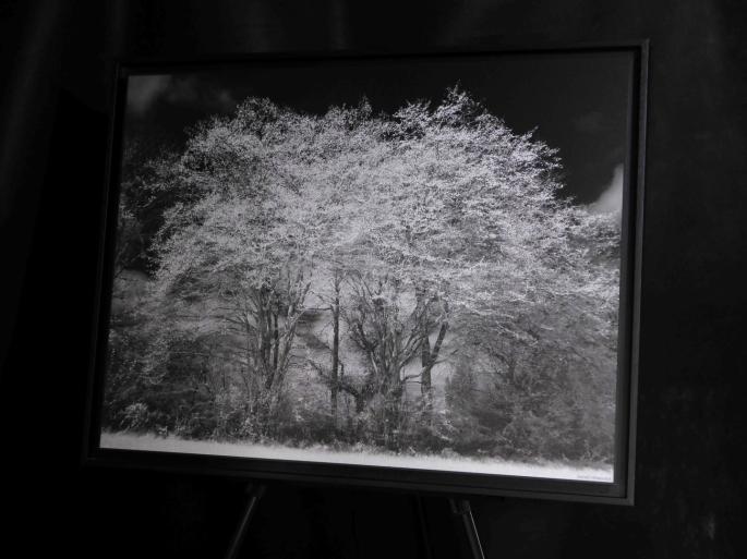 Charmes Bourgeons 60x80 cm (expo l'arbre en lumiere 2015)