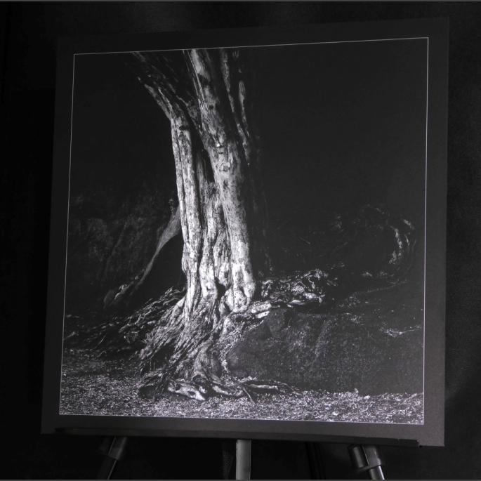 Sculpture vivante 50x50cm
