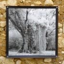 100x100 infrarouge noir blanc André Hemelrijk (10) (Medium)