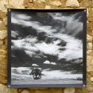 100x100 infrarouge noir blanc André Hemelrijk (13) (Medium)