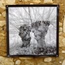 100x100 infrarouge noir blanc André Hemelrijk (19) (Medium)