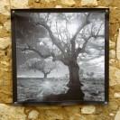100x100 infrarouge noir blanc André Hemelrijk (23) (Medium)
