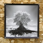 100x100 infrarouge noir blanc André Hemelrijk (3) (Medium)