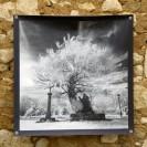 100x100 infrarouge noir blanc André Hemelrijk (5) (Medium)