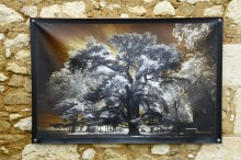 100x150 infrarouge couleur André Hemelrijk (1) (Medium)