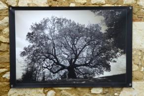 100x150 infrarouge coulour retro André Hemelrijk (7) (Medium)
