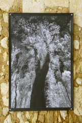 100x150 infrarouge noir blanc André Hemelrijk (8) (Medium)